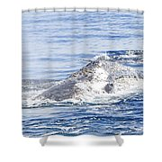 Grey Whale 2 Shower Curtain