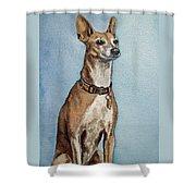Greyhound Commission Painting By Irina Sztukowski Shower Curtain