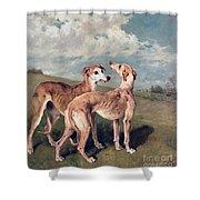 Greyhounds Shower Curtain