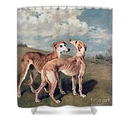Greyhounds Shower Curtain by John Emms