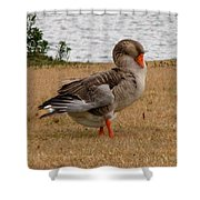 Greylag Goose 2 Shower Curtain
