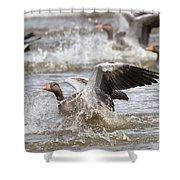 Greylag Goose Landing Shower Curtain