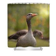 Greylag Goose Shower Curtain