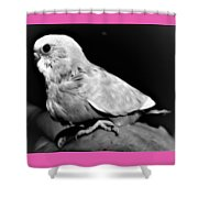 Greyscale Parraket Baby Sitting On Hand Shower Curtain