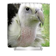 Griffins Vulture Eye To Eye Shower Curtain