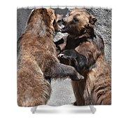 Grizzlies' Playtime 3 Shower Curtain
