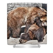 Grizzlies' Playtime 5 Shower Curtain