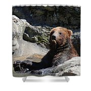 Grizzlies Snacking On Things They Find In A River Shower Curtain