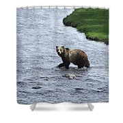 Grizzly At Yellowstone Shower Curtain