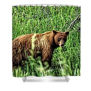 Grizzly Bear 2 Shower Curtain