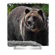 Grizzly Bear 3 Shower Curtain