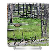 Grizzly Bear And Cub Cross An Area Of Regenerating Forest Fire Shower Curtain