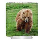 Grizzly Bear Approaching In A Field Shower Curtain