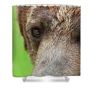 Grizzly Bear Arctos Ursus Shower Curtain