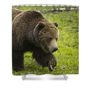 Grizzly Bear Boar-signed-#8517 Shower Curtain