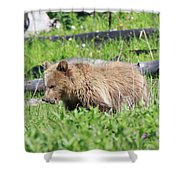 Grizzly Bear Cub In Yellowstone National Park Shower Curtain