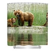 Grizzly Bear Family  Shower Curtain