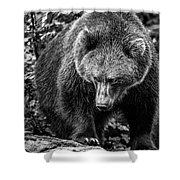 Grizzly Bear In Black And White Shower Curtain