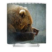 Grizzly Bear Lying Down Shower Curtain