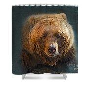 Grizzly Bear Portrait Shower Curtain
