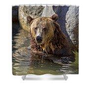 Grizzly Bear - San Diego Zoo Shower Curtain