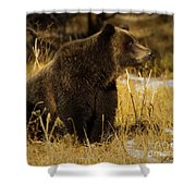 Grizzly Bear-signed-#6672 Shower Curtain