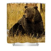 Grizzly Bear-signed-#6721 Shower Curtain