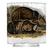 Grizzly Bear (ursus Ferox) Shower Curtain