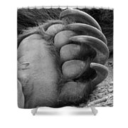 Grizzly Claws Shower Curtain
