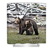 Grizzly Cub Holding Mother Shower Curtain