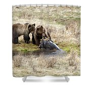 Grizzly Dinner Shower Curtain
