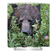 Grizzly In The Berry Bushes Shower Curtain