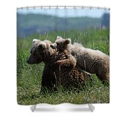 Grizzly  Mother And A Cub In Katmai National Park Shower Curtain