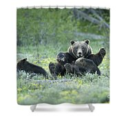 Grizzly Romp - Grand Teton Shower Curtain by Sandra Bronstein