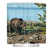 Grizzly Sow At Yellowstone Lake Shower Curtain