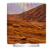 Grizzly Under The Rainbow Shower Curtain
