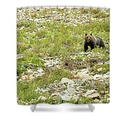 Grizzly Watching People Watching Grizzly No. 2 Shower Curtain
