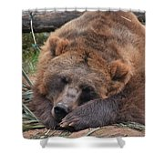 Grizzly's Naptime Shower Curtain