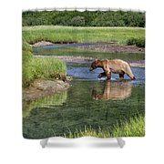 Grizzy Bear Crossing The River Shower Curtain