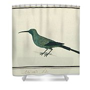 Groene Honingvogel Shower Curtain