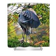 Grooming Blue Heron Shower Curtain