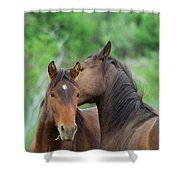 Grooming Horses Shower Curtain