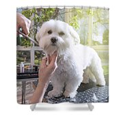 Grooming The Neck Of Adorable White Dog Shower Curtain