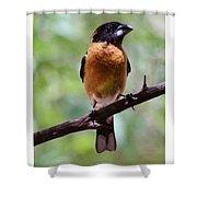 Grosbeak 062314a Shower Curtain