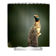 Ground Agama Sunbathing Shower Curtain