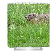 Groundhog In A Field Of Flowers Shower Curtain