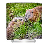 Groundhog Mother Love Shower Curtain