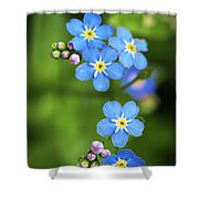 Group Of Blue Flowers Forget-me-not Shower Curtain