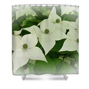 Group Of Chinese Dogwoods Shower Curtain