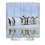 Group Of Emperor Penguins Shower Curtain